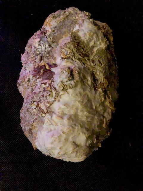 Mycelium mask